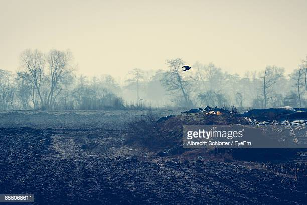 silhouette bird flying against bare trees during foggy weather at morning - albrecht schlotter foto e immagini stock