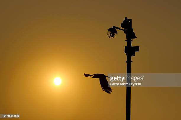 Silhouette Bird Flying By Street Light Against Clear Sky During Sunset