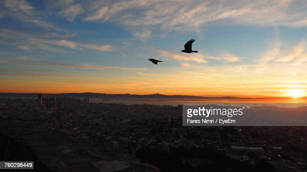 Silhouette Bird Flying Over City Against Sky During Sunset