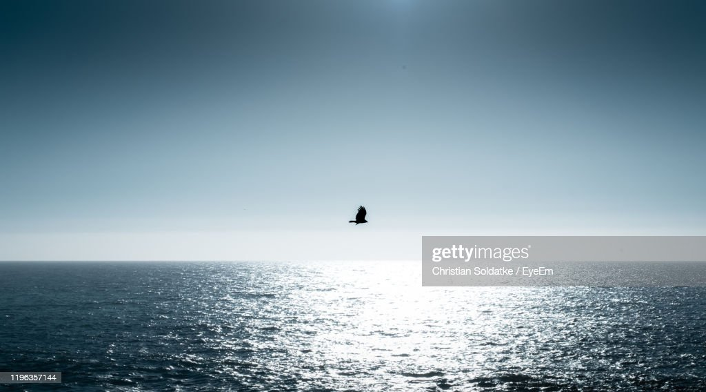 Silhouette Bird Flying Over Sea Against Clear Sky : Stock-Foto
