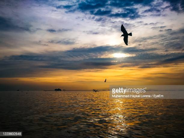 silhouette bird flying over sea against sky during sunset - lorena day stock pictures, royalty-free photos & images