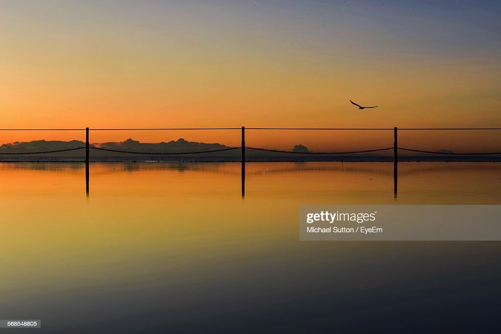 Silhouette Bird Flying Over Sea During Sunrise : Stock Photo