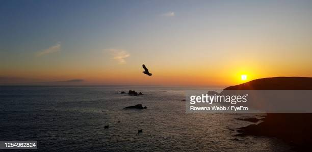 silhouette bird flying over sea during sunset - horizon stock pictures, royalty-free photos & images