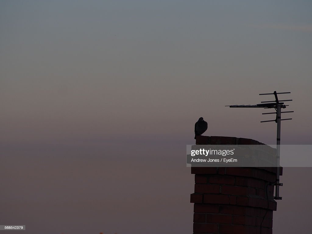 Silhouette Bird Perching On Built Structure Against Sky At Sunset : Stock Photo