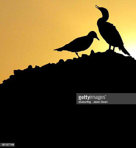 silhouette bird with sunset - s0ulsurfing photos et images de collection