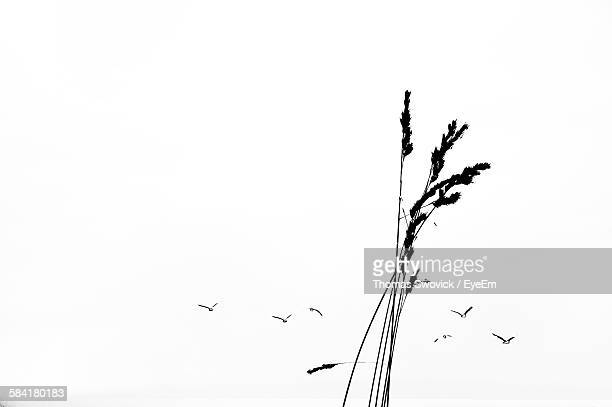Tall Grass Silhouette Inside Silhouette Birds And Tall Grass Against Clear Sky Stock Photos And Pictures Getty Images