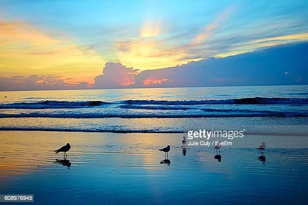 silhouette birds at beach against sky during sunset - julie culy stock pictures, royalty-free photos & images
