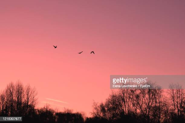 silhouette birds flying against sky during sunset - millennial pink stock pictures, royalty-free photos & images