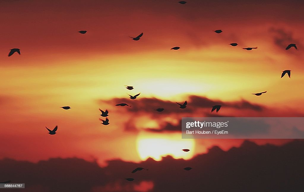 Silhouette Birds Flying On Sky During Sunset : Stock Photo