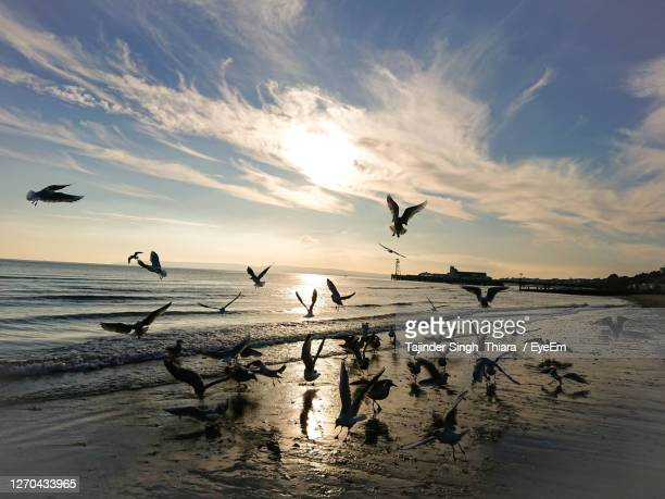 silhouette birds flying over beach against sky during sunset - bournemouth england stock pictures, royalty-free photos & images