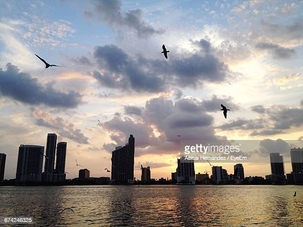 Silhouette Birds Flying Over Lake By Buildings Against Sky During Sunset