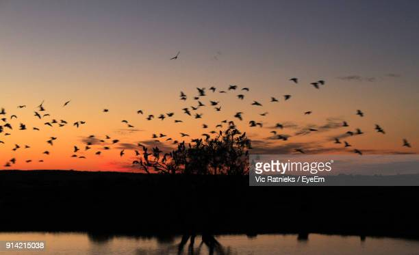 silhouette birds flying over landscape against sky during sunset - ratnieks stock pictures, royalty-free photos & images