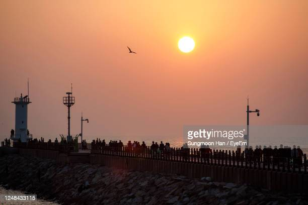 silhouette birds flying over sea against orange sky - jeonju stock pictures, royalty-free photos & images