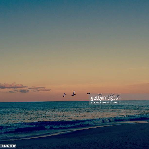silhouette birds flying over sea against sky during sunset - kitty hawk beach stock pictures, royalty-free photos & images