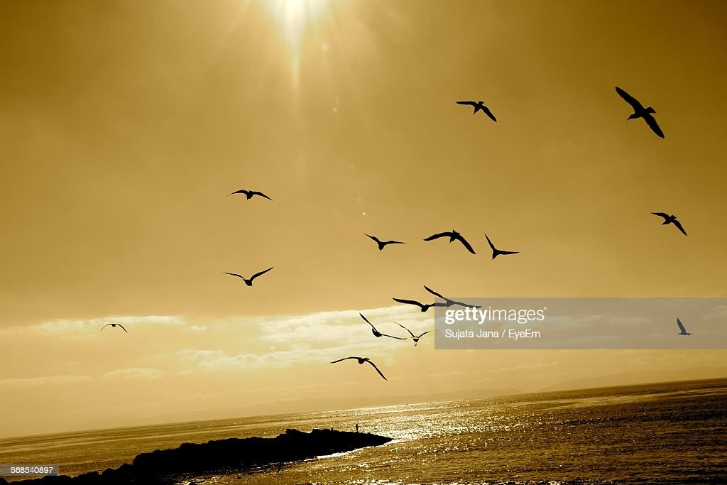 Silhouette Birds Flying Over Sea During Sunset : Stock Photo