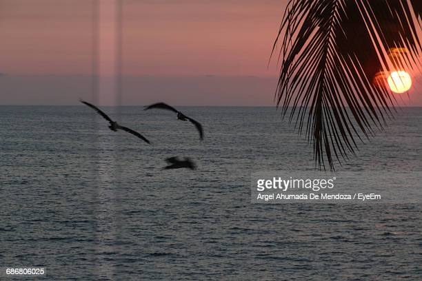 Silhouette Birds Flying Over Sea Seen Through Glass Window During Sunset