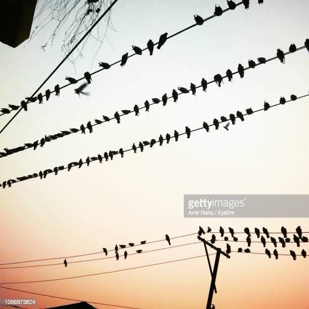 Silhouette Birds Perching On Cables Against Clear Sky During Sunset