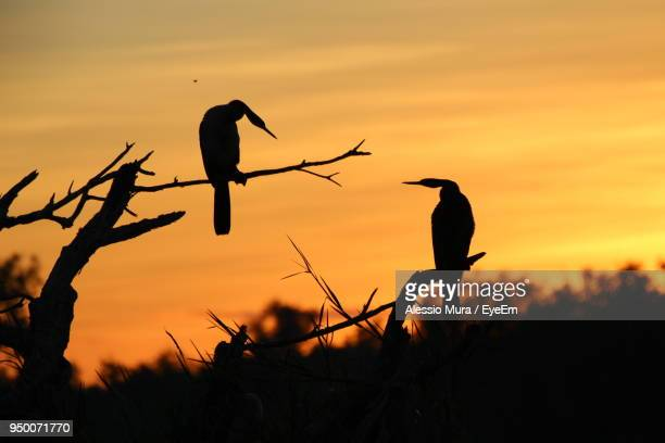 Silhouette Birds Perching On Tree Against Sunset Sky