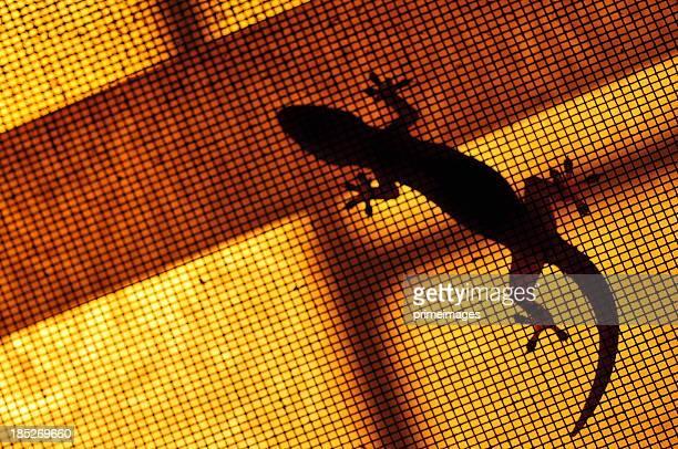 Silhouette Braun gepunktet gecko Kriechtier