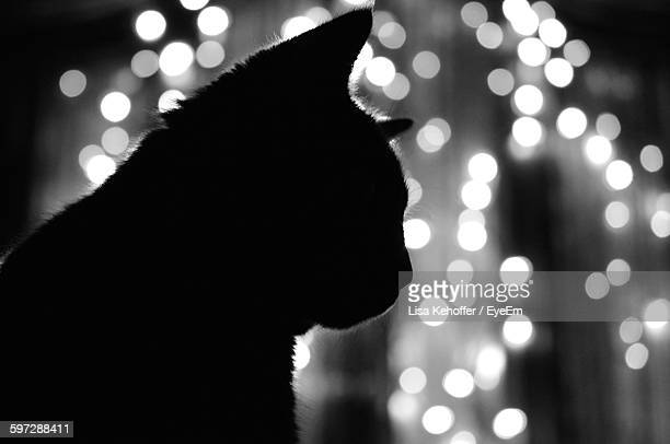 Silhouette Cat Against Defocused Lights At Night