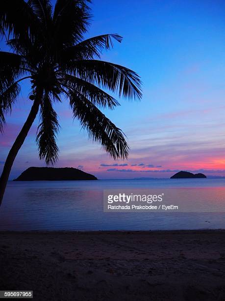 silhouette coconut palm tree on beach against sky - surat thani province stock pictures, royalty-free photos & images