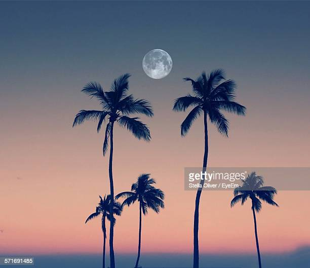 Silhouette Coconut Palm Trees Against Full Moon In Orange Sky