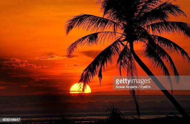 Silhouette Coconut Palm Trees Against Orange Sky During Sunset