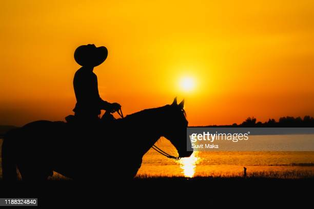 silhouette cowboy and  horse with sunset. - night safari stock pictures, royalty-free photos & images