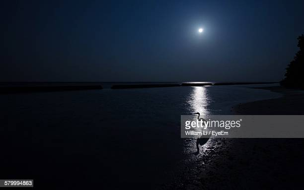 silhouette crane at sea shore against clear sky during night - william moon stock pictures, royalty-free photos & images