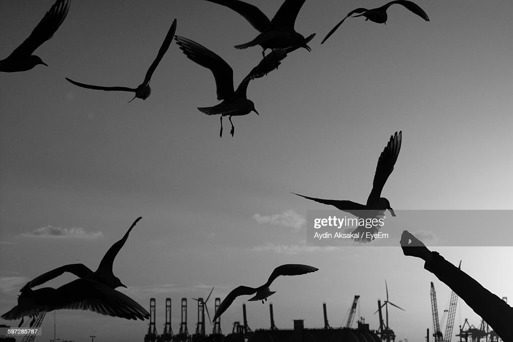Silhouette Cropped Hand Feeding Birds Against Sky : Stock Photo