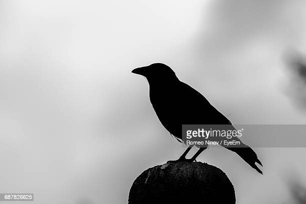 Silhouette Crow Perching On Pole Against Sky