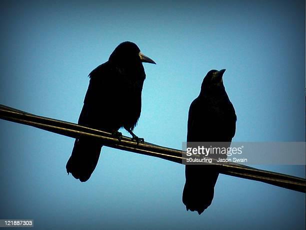 silhouette crow - s0ulsurfing stock-fotos und bilder