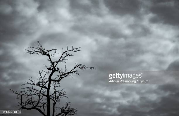 silhouette dead tree on dark dramatic sky and white clouds background for peaceful death. stormy sky - sin esperanza fotografías e imágenes de stock