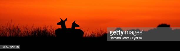 Silhouette Deer Sitting On Landscape Against Sky During Sunset
