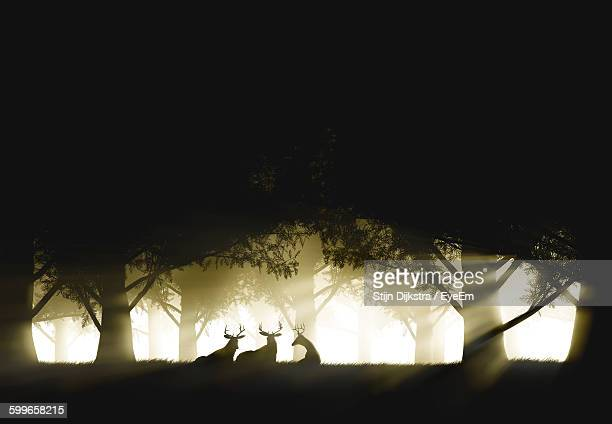 Silhouette Deer Sitting With Trees On Sunny Day
