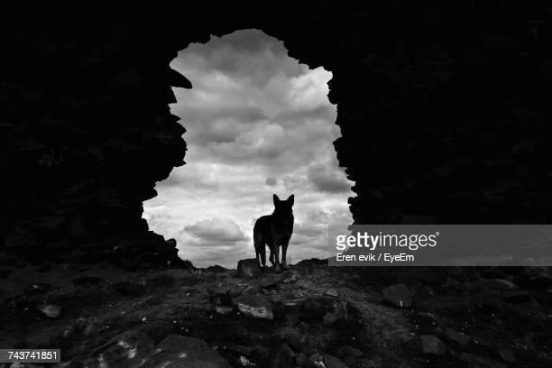 silhouette dog standing against sky - einzelnes tier stock-fotos und bilder