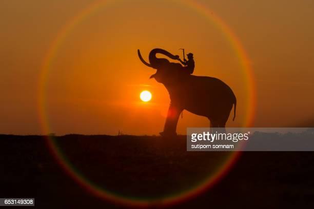 Silhouette elephant in the circle of the sun
