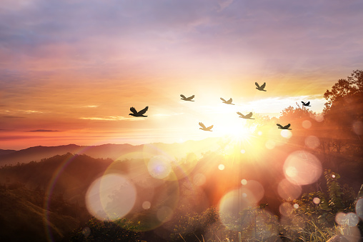 Silhouette flock of bird at sunrise 1050750000