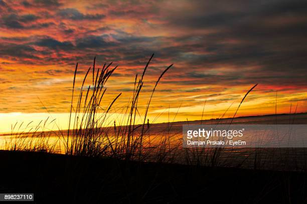 Silhouette Grass By Sea Against Orange Sky