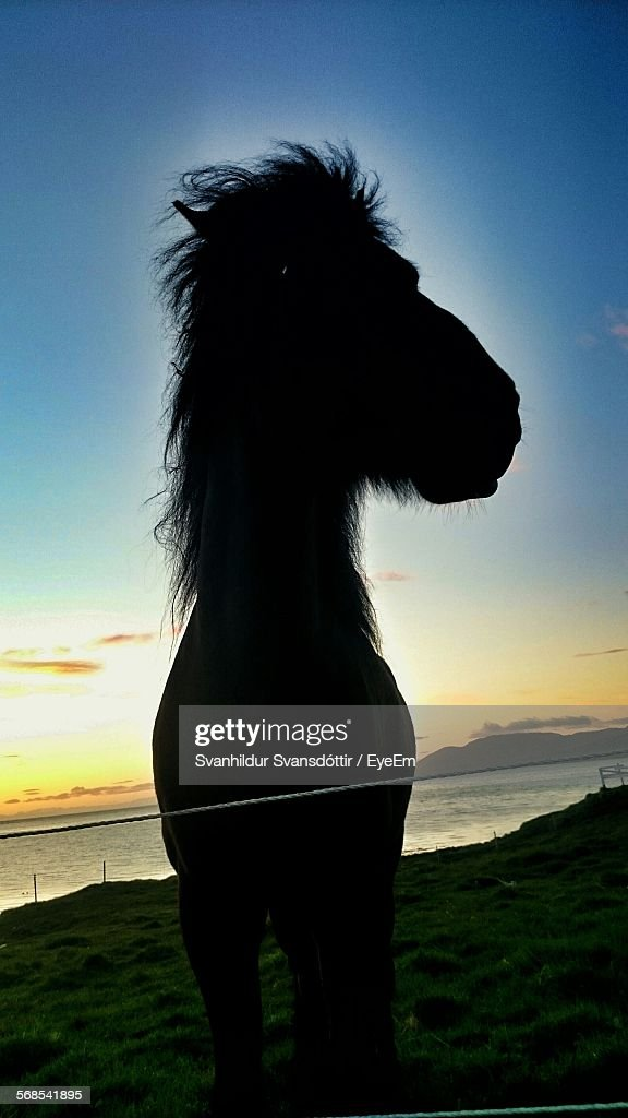 Silhouette Horse Against Sky During Sunset On Beach : Stock Photo
