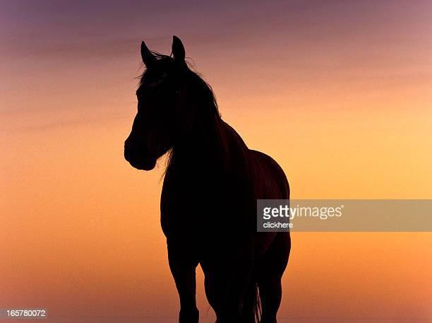 馬のシルエットで、テキサスの夕日