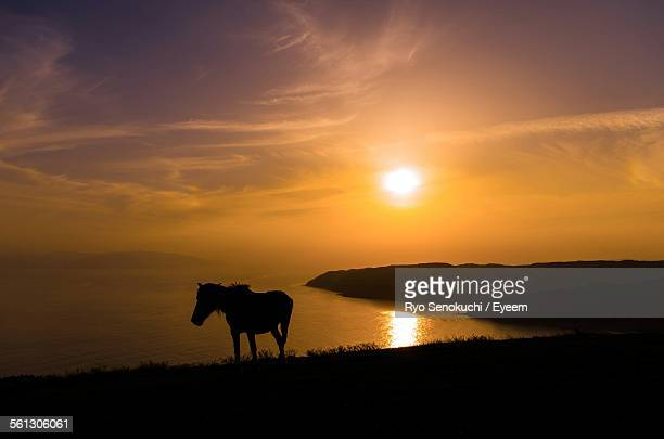 Silhouette Horse On Field By Sea At Sunset
