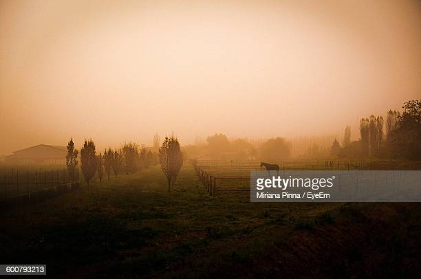 Silhouette Horse Standing In Ranch In Misty Morning