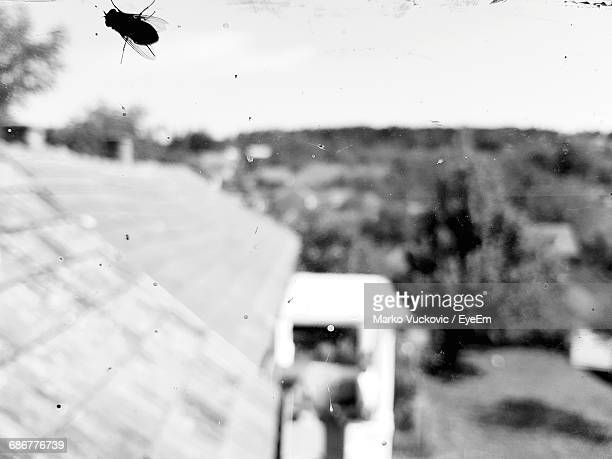 Silhouette Housefly On Glass Window