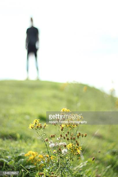 silhouette man - alyson fennell stock pictures, royalty-free photos & images