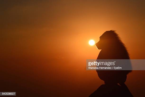 Silhouette Monkey Sitting On Rock Against Sky During Sunset