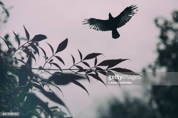 Silhouette of a bird taking flight with foliage in the foreground