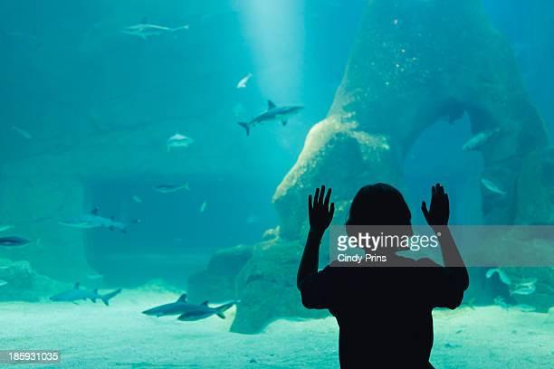 Silhouette of a boy looking at a shark aquarium