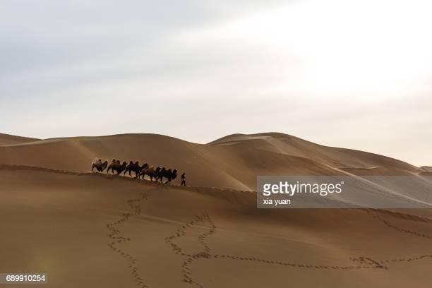silhouette of a camel caravan passing through the sand dunes in desert - シルクロード ストックフォトと画像