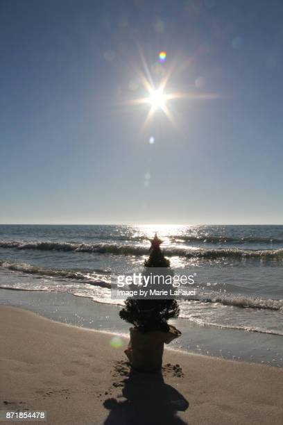 silhouette of a christmas tree along the water's edge at the beach - marie lafauci stock pictures, royalty-free photos & images